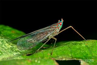 False lanternfly (Centromeria sp.) - ESC_0057