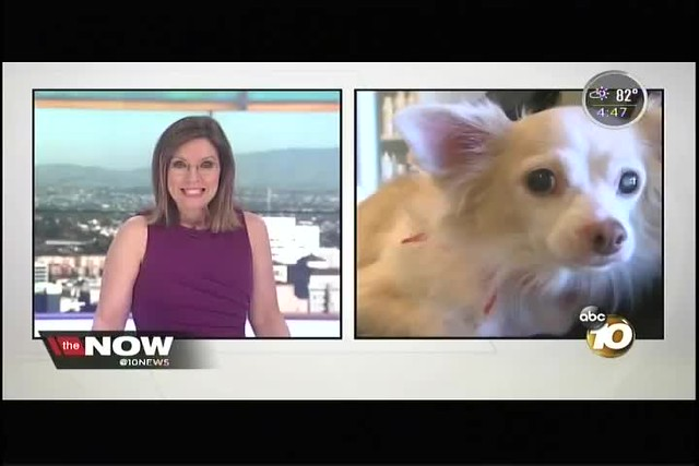 MILITARY APPRECIATION DAY - HELPING PAWS [1]  KGTV-TV  10-16-17 4pm