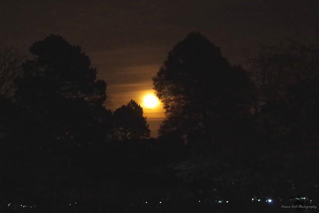 moon over sheffield botanical gardens 2017. (4)