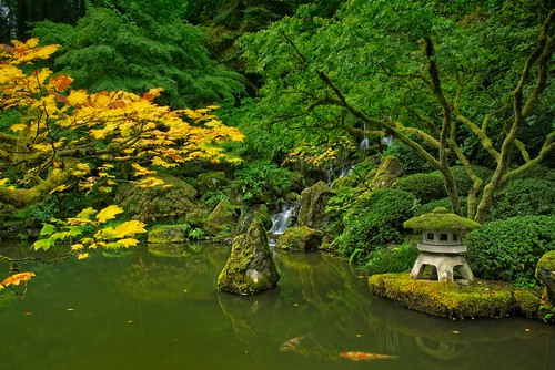 koi fish goldfish pond japanesegarden portland portlandjapanesegarden autumn fallcolors fallseason green jchoate d610 on1pics