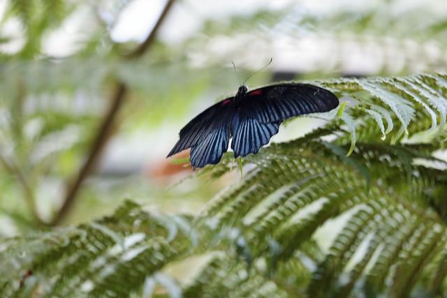 Schmetterling in der Wilhelma II