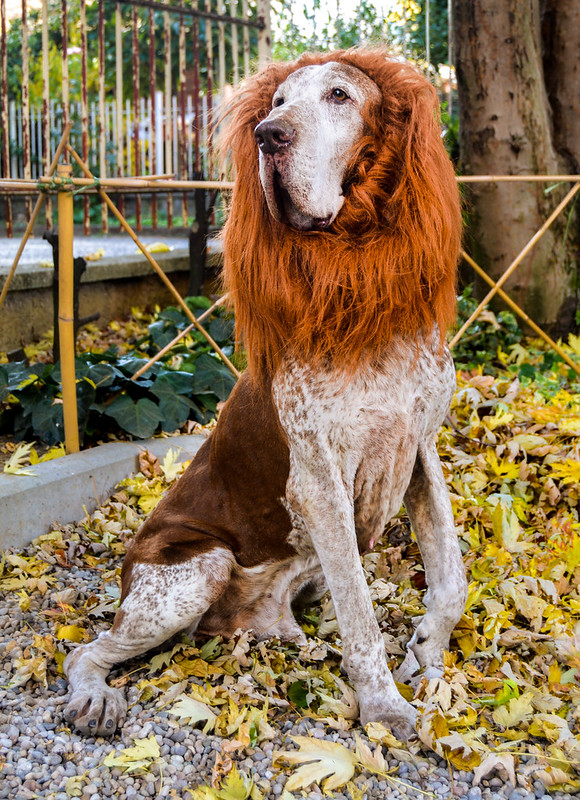 Halloween da leoni