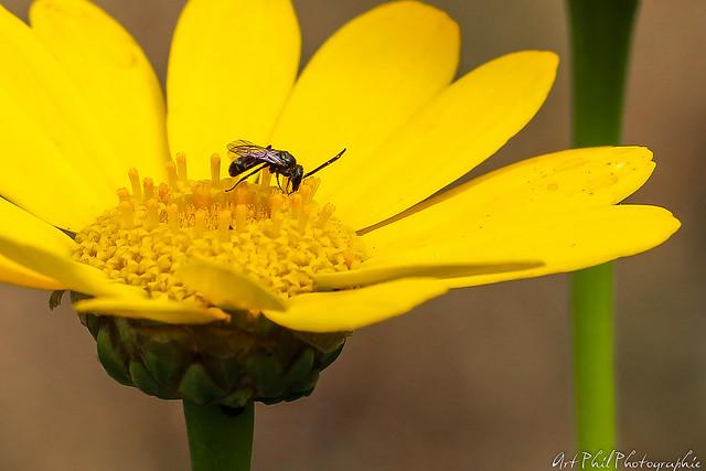 Fleurs Pétales de couleurs et Insectes