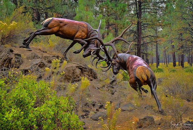 High Desert Museum (Outdoor Display) - Bend, Oregon