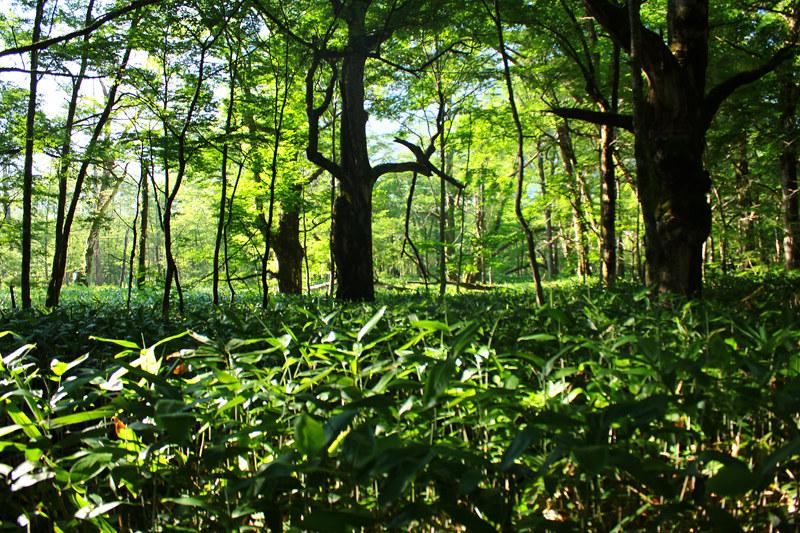 20110716_焼岳_0028