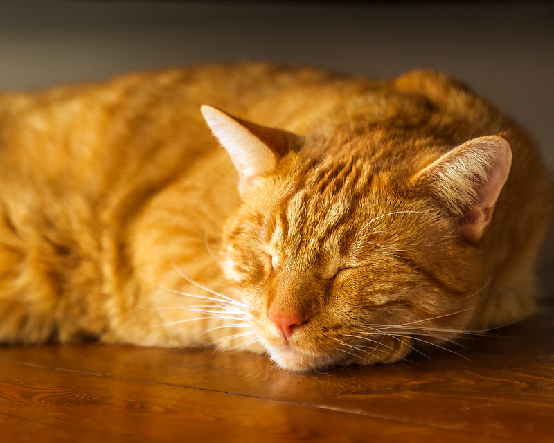 Agamemnon Sleeps.jpg
