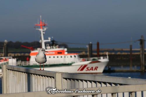 Möwe am Fährhafen in Cuxhaven | by Stilkollektiv