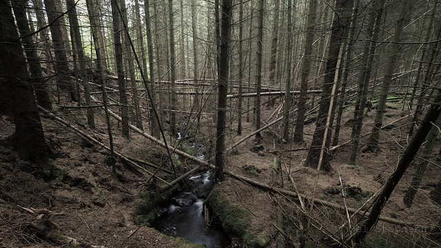 Pittodrie woods (M2105416 E-M1ii 7mm iso200 f8 1s)