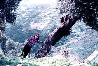 Albero Sardegna