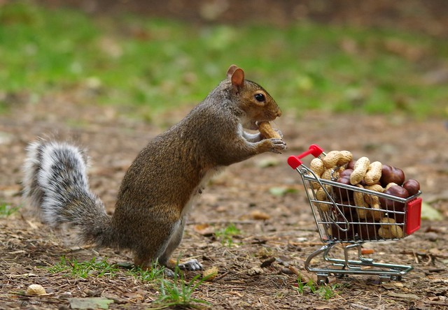squirrel with shopping cart full of nuts. (9)
