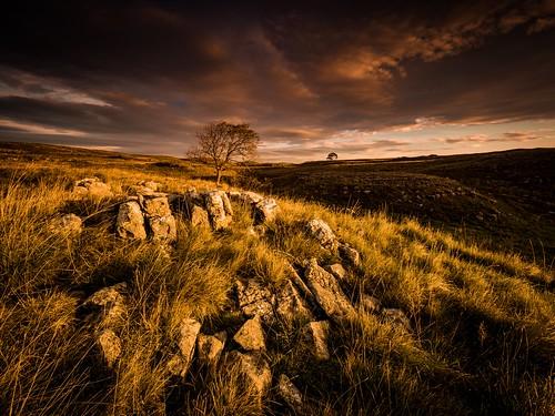 malham yorkshiredales hill landscape landscapephotography nature sunrise tree clouds mountains lonetree