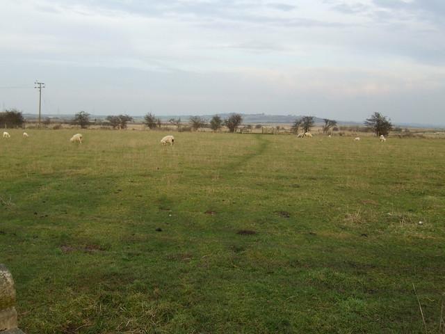 Footpath near North Fambridge