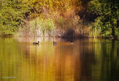 Autumn at Hirschman Pond