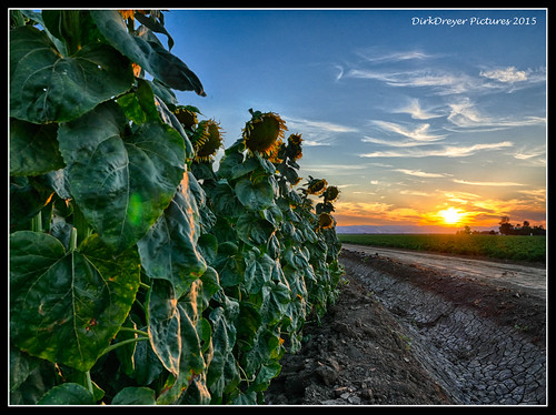california sunset landscape lumix us lowlight unitedstates outdoor dixon panasonic sunflower hdr m43 gh4 mirrorless microfourthirds m43ftw dreyerpicturescom