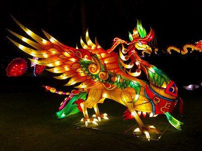 China Light ZOO show, Antwerp.