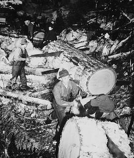 Japanese-Canadian internees cut logs for lumber and firewood, Tashme, British Columbia / Canadiens d'origine japonaise d'un camp d'internement qui coupent des bûches pour en faire du bois de charpente et de chauffage. Tashme (Colombie-Britannique)