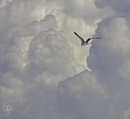 florida destin miramarbeach gulfofmexico birds skyscape laughinggull clouds cloudscape