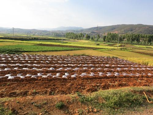 Agricutural landscape