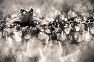 Creative common frog in rain storm, Bristol, Ian Wade
