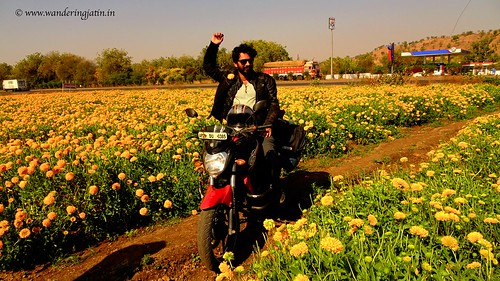 Riding into field of Marigold flowers | by wanderingjatin