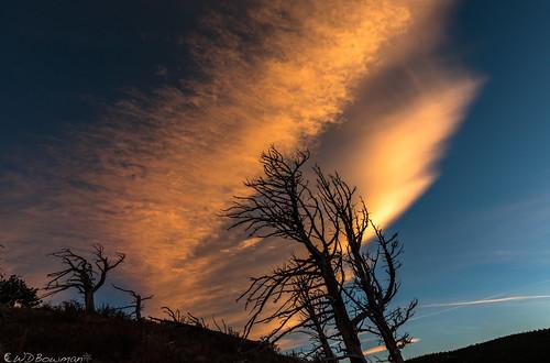 sunset mountainwavecloud treeskeletons limberpines pinusflexilis grassytop witchinghour