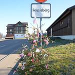 24.11.16 Christbäume an der Dorfstrasse