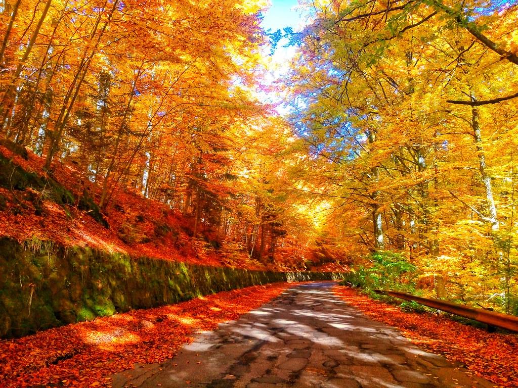 Magic Land Razvan Gheorghe Flickr