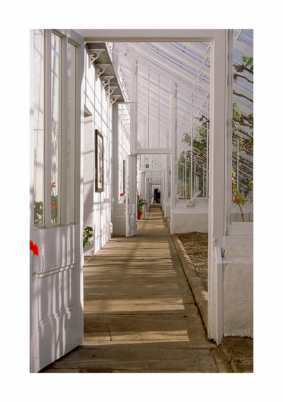 FILM - In the greenhouse