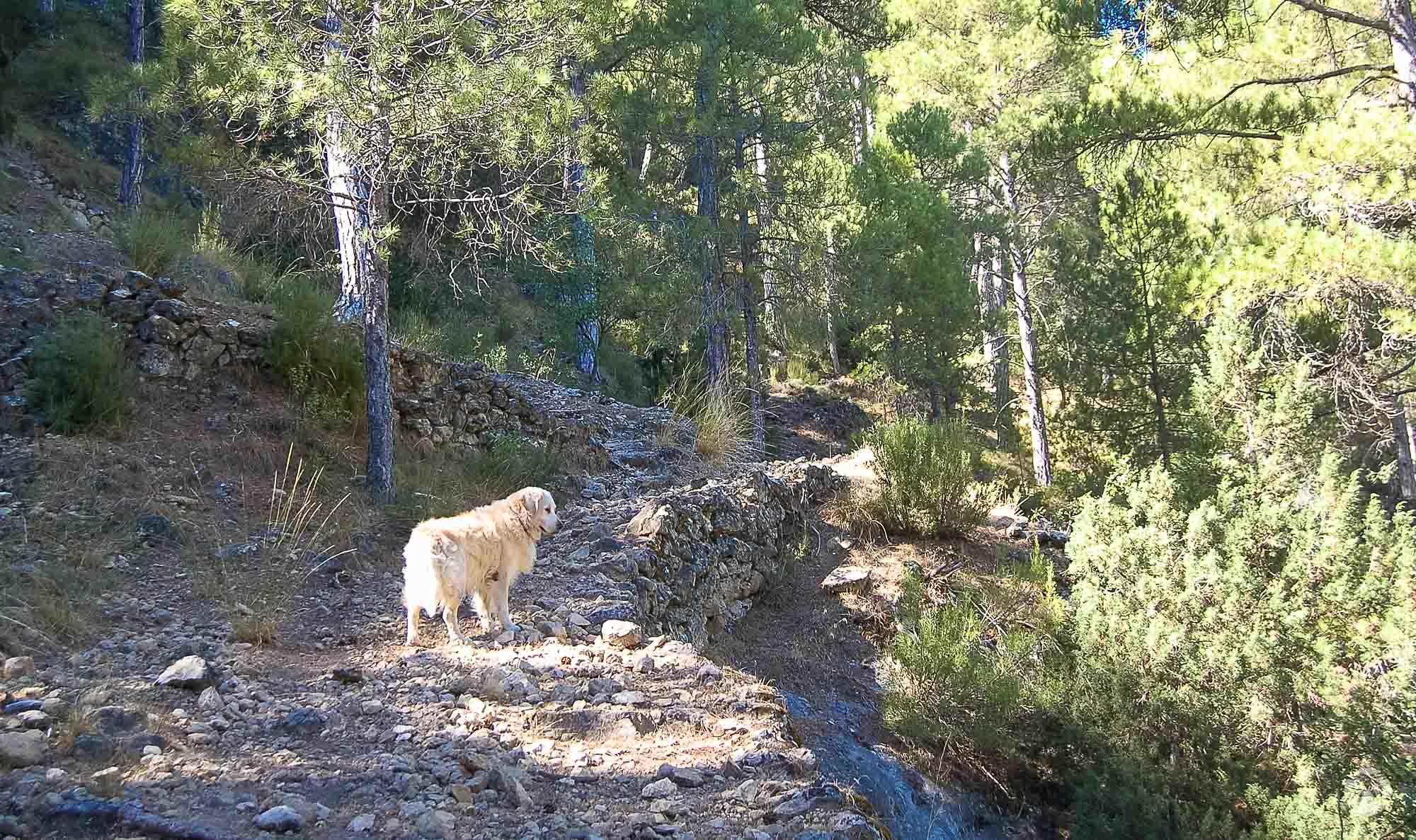Moss muy pendiente de los animales en el arroyo del Vidrio