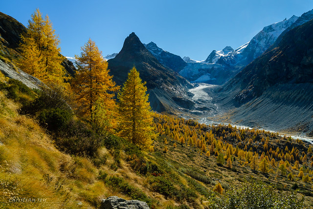 Mélèzes du Val de Ferpècle (Switzerland)