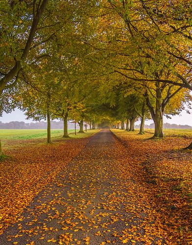 iwerneminster england unitedkingdom gb automne vibrantcolours dorset natural natur naturaleza nat anthonywhitesphotography tall trees