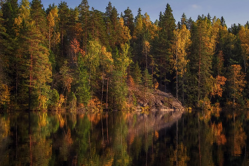 forest autumn color colors colorful tree trees light leaves landscape pine birch yellow orange green pond rocks reflection luukki espoo finland peaceful