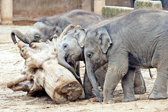 baby elephants - Elefantenbaby