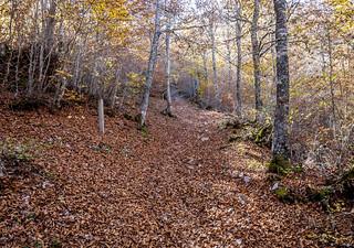 otoño2 | by Herlu
