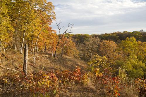 singingwoods fall autumn leaves