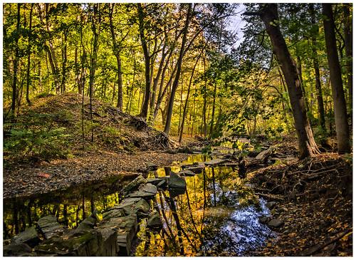 toronto ontario yellow creek autumn cans2s sony a77