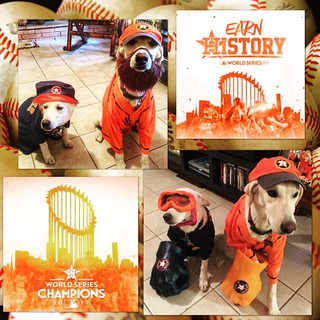 Go 'stros! | by Stone Ridge Veterinary Medical Center