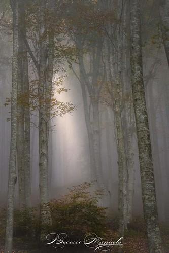 landscape autumn foliage forestecaentinesi camaldoli tuscany trees fog