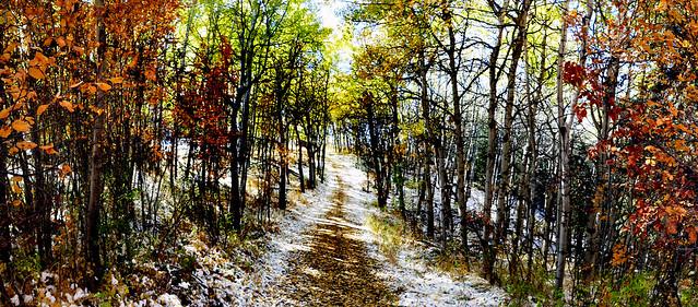 Autumn Alberta.