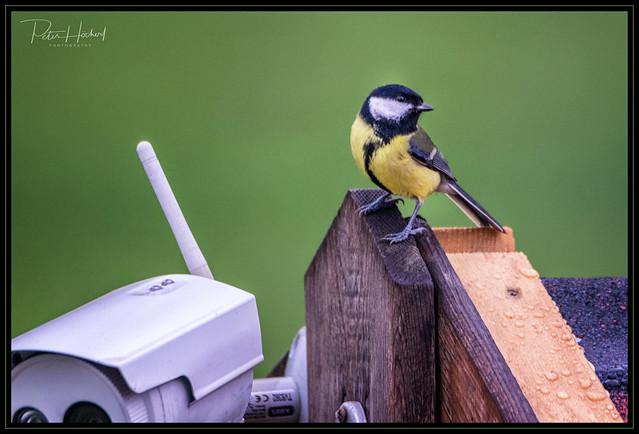 bird on top