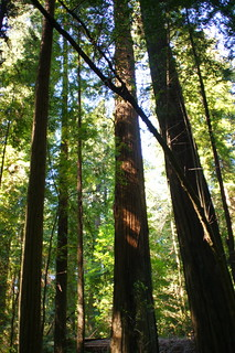 California Redwoods | by Tjflex2