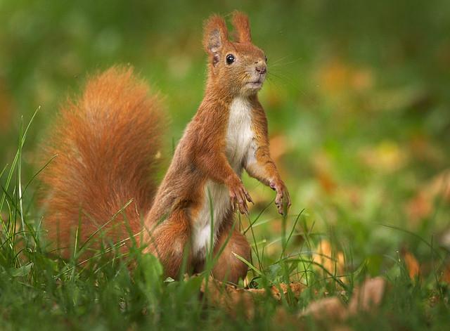 Ready to catch a nut