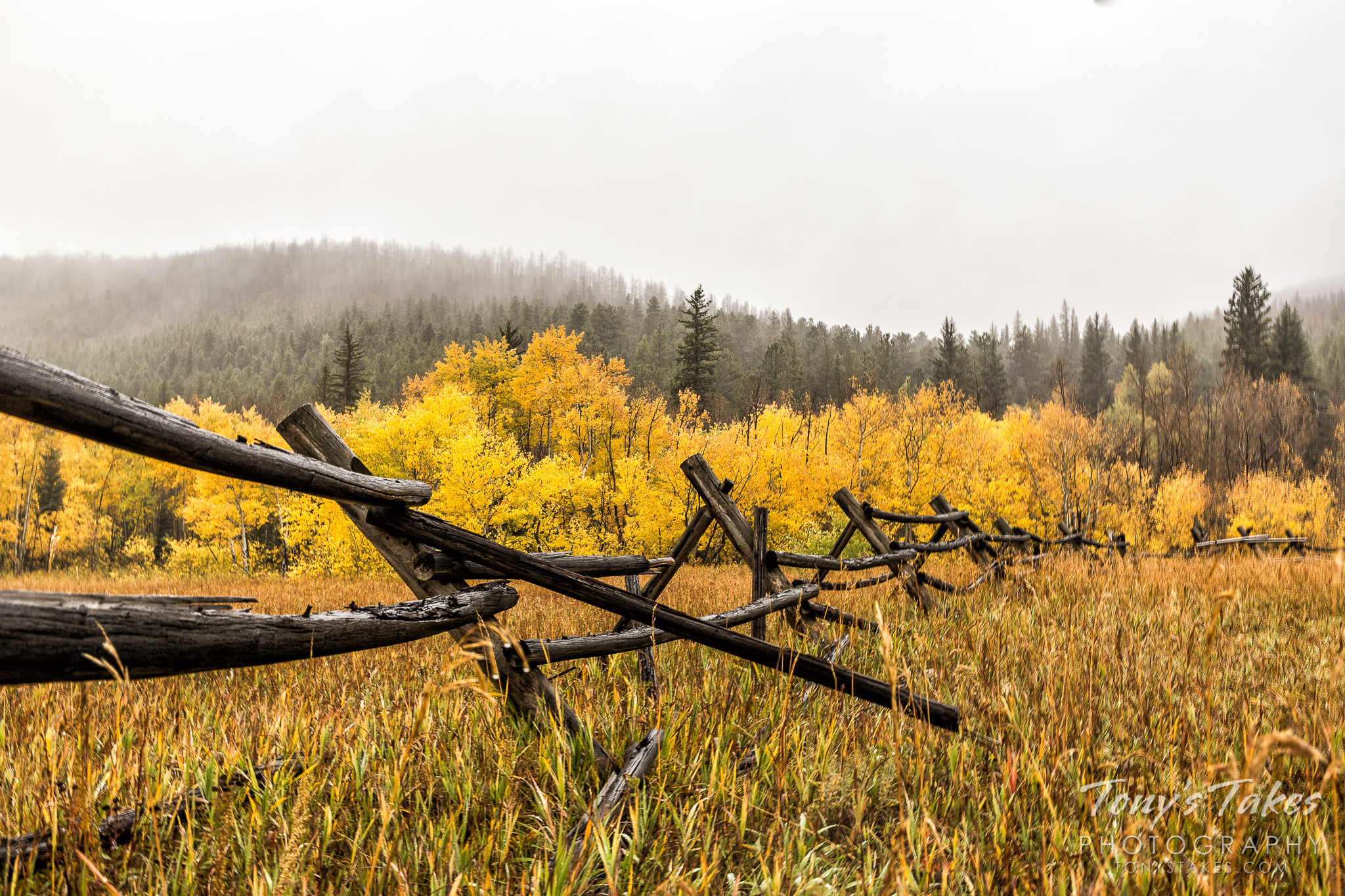 Fall colors, fog and a fence along Colorado's Peak to Peak Highway.    (© Tony's Takes)
