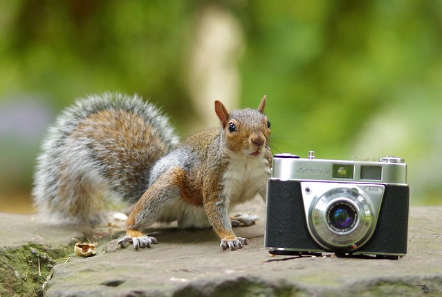 Squirrel with camera  (1)