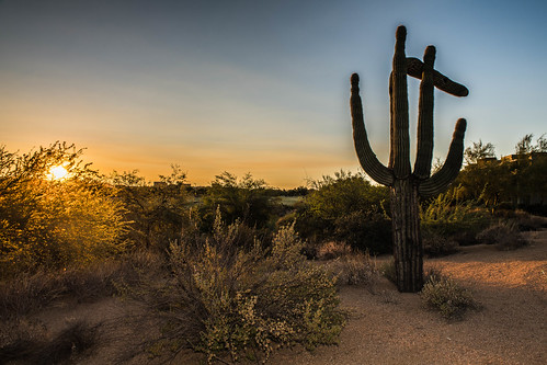 nikond850 cactus arizona sunrise desert desertridge