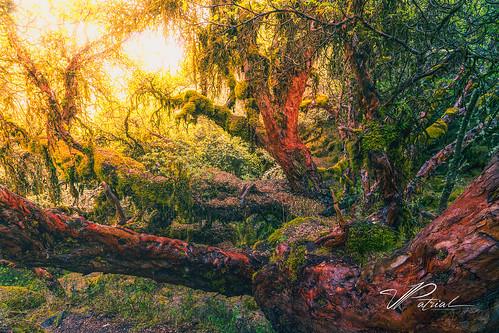qosqo peru pe polylepis forest sunset lights