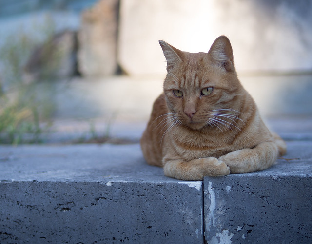 Cemetery Cat, Rome (explore)