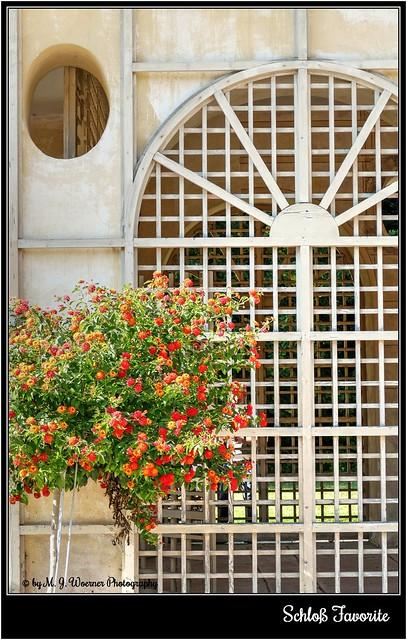 Schloss Favorite – Orangerie 3