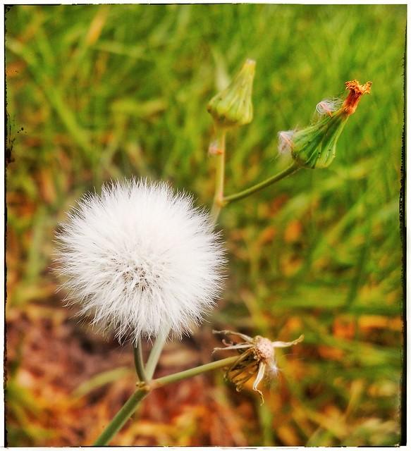 Cores da natureza. #flores #flowers #florzinha #florzinhalinda #naturalbeauty #natureza #naturephotography #jardim #floreslindas #floramarela #revistaxapury #eunotg #criacaodedeus #obradivina #instaflowers #instaflores #motox2 #instamotox2 #garden #floric