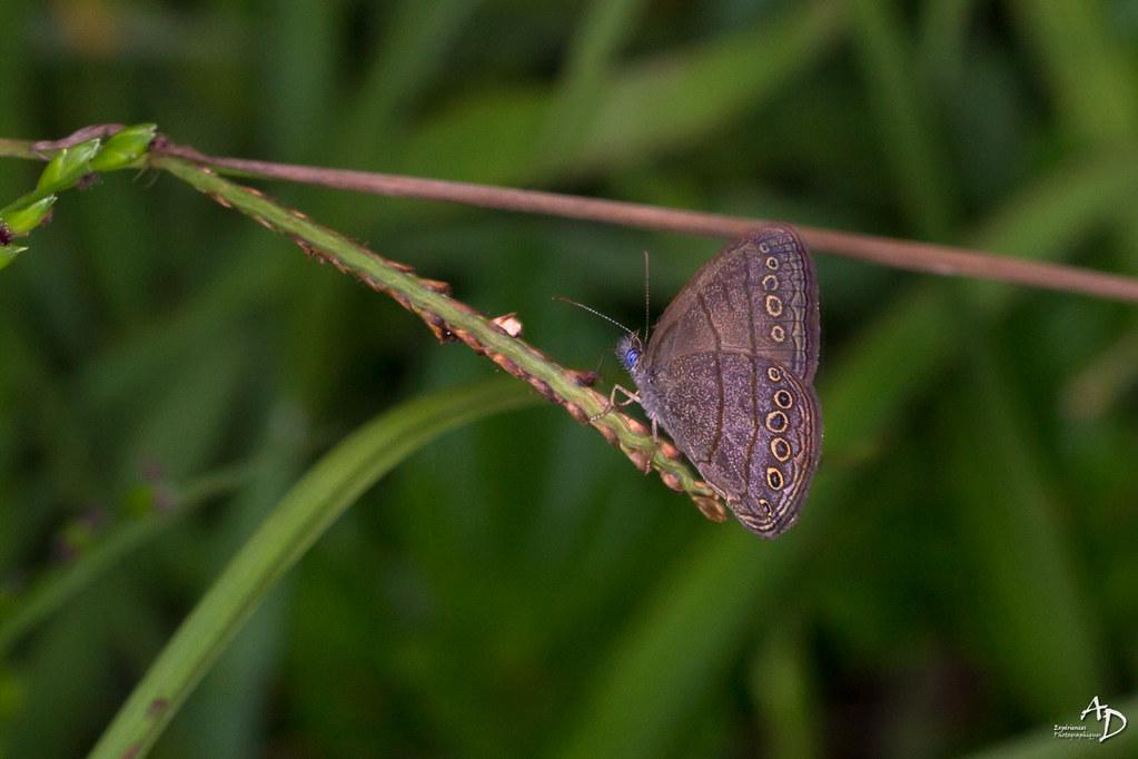 Papillon Du Jour Bonjour Alain Did Flickr